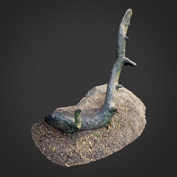 nature forest roots 004 - 3DOcean Item for Sale