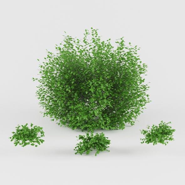 Vray Ready Plants Bush - 3DOcean Item for Sale