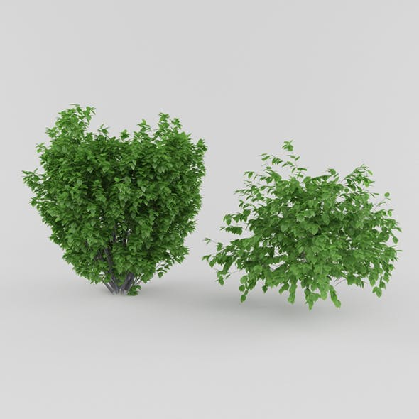 Vray Ready Plants Bush