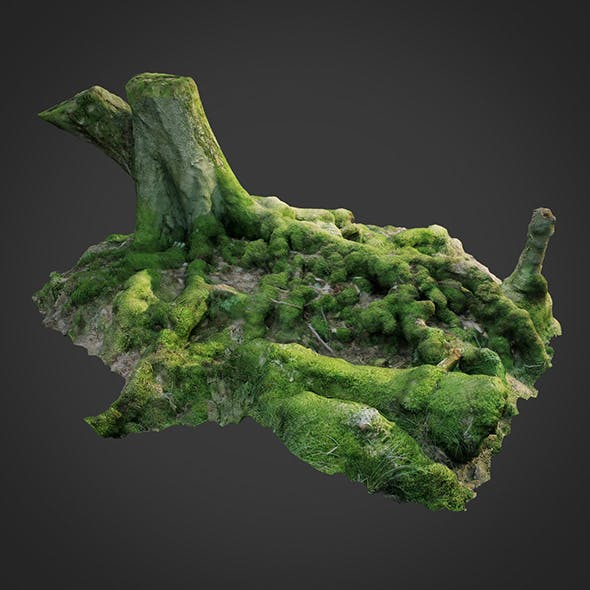 3d scanned nature forest roots 005 - 3DOcean Item for Sale