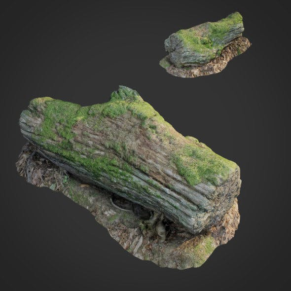 3d scanned nature forest stuff 001 - 3DOcean Item for Sale