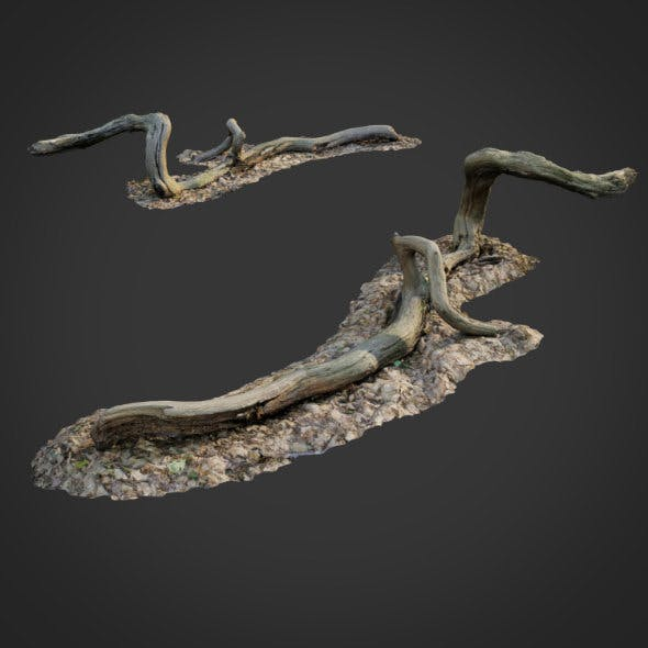 3d scanned nature forest stuff 002 - 3DOcean Item for Sale