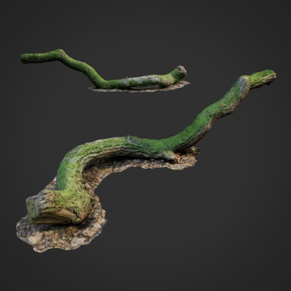 3d scanned nature forest stuff 003 - 3DOcean Item for Sale
