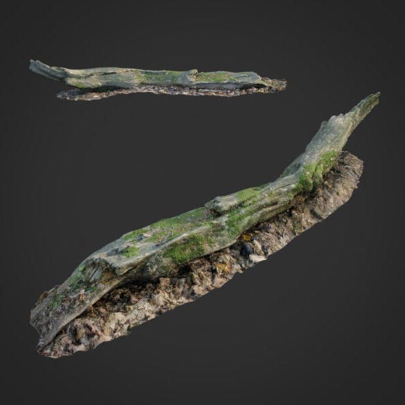 3d scanned nature forest stuff 004