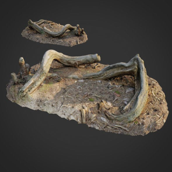 3d scanned nature forest stuff 005 - 3DOcean Item for Sale