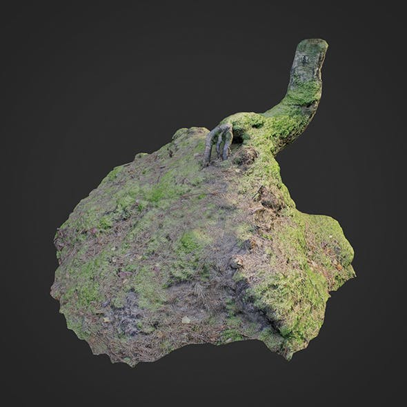 3d scanned nature forest stuff 006 - 3DOcean Item for Sale