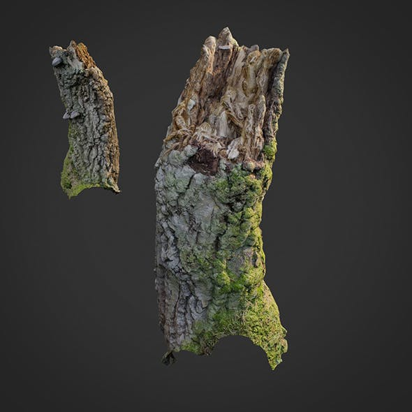 3d scanned nature forest stuff 007