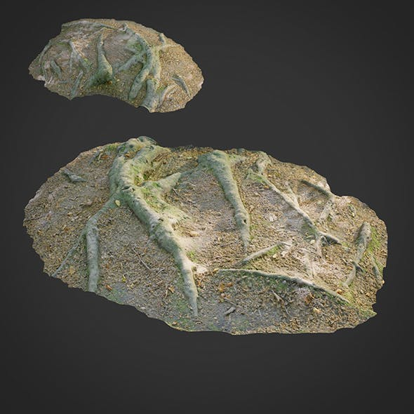 3d scanned nature forest roots 011