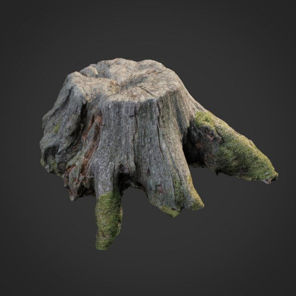 3d scanned nature tree stump 004