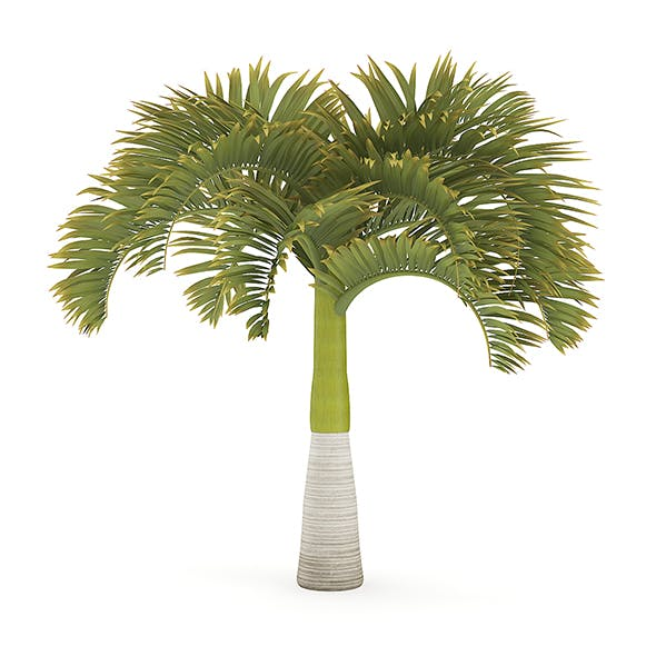 Christmas Palm Tree - 3DOcean Item for Sale