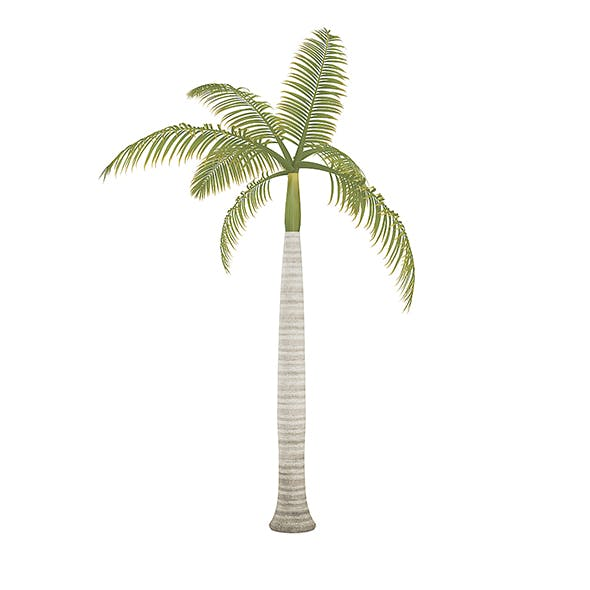 Royal Palm - 3DOcean Item for Sale