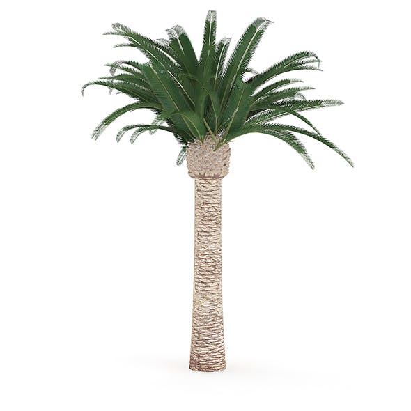 Pineapple Palm - 3DOcean Item for Sale