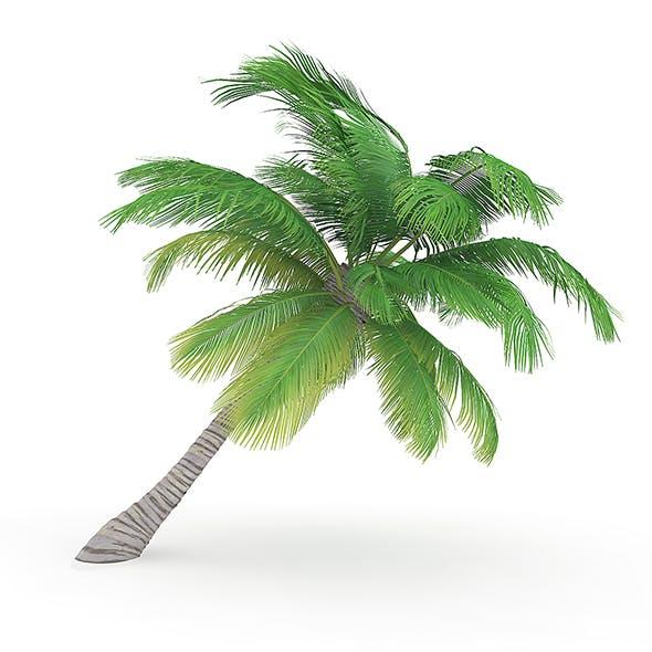 Sloping Palm Tree