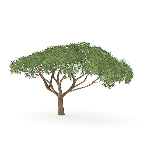 Thorn Tree - 3DOcean Item for Sale