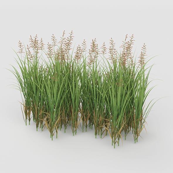 Grass Bush - 3DOcean Item for Sale