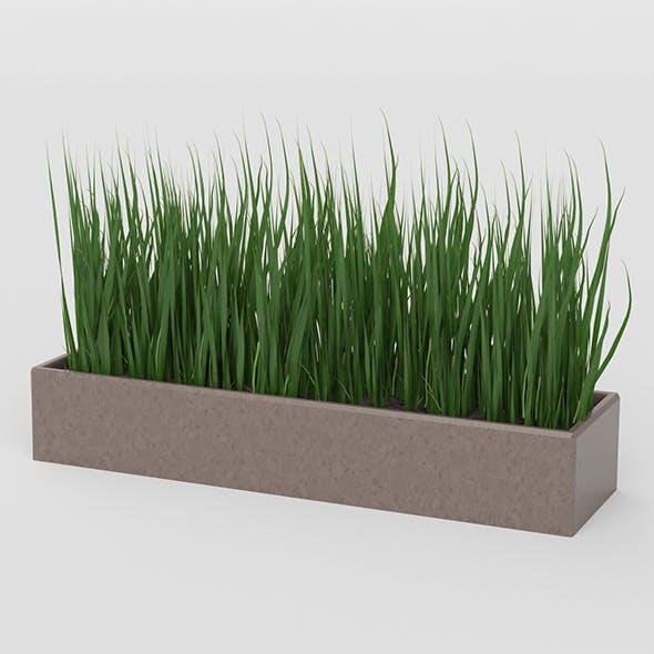Grass Pot