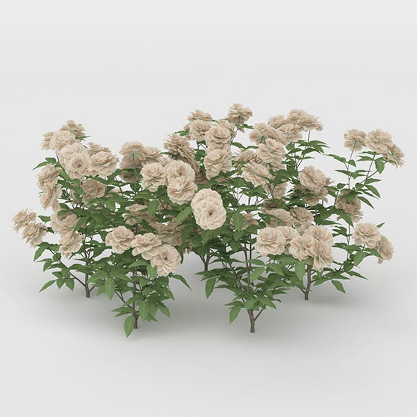 White Daisies Flower Bush - 3DOcean Item for Sale