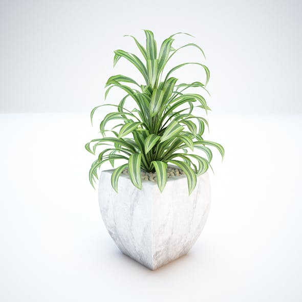 Plant and Vase for Exterior