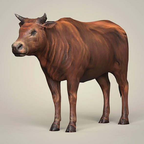 Game Ready Low Poly Bull