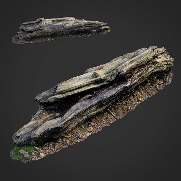 3d scanned nature forest stuff 009