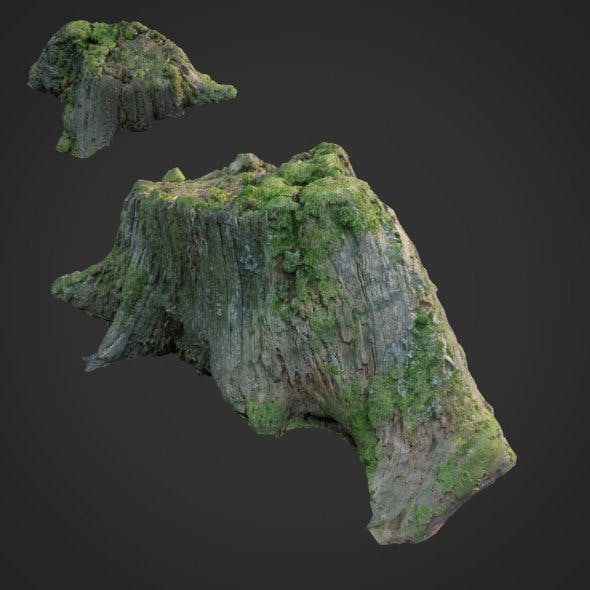 3d scanned nature tree stump 008