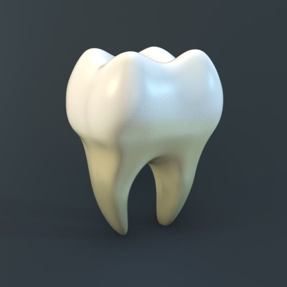 Human Tooth - 3DOcean Item for Sale