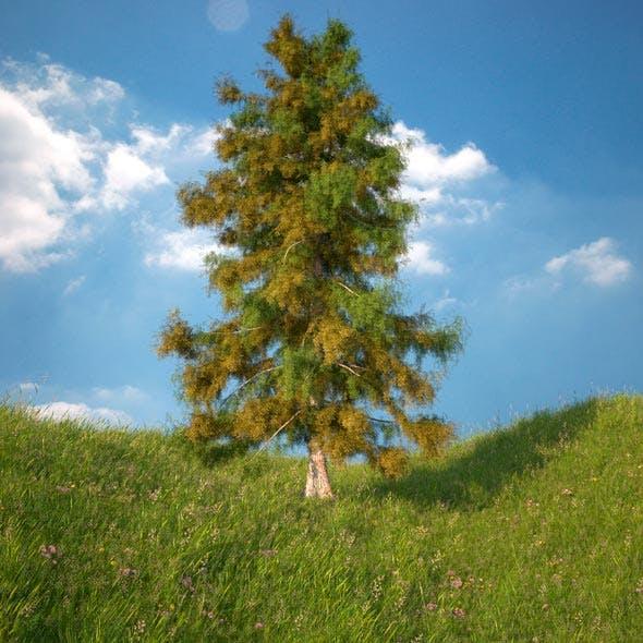Cedar Tree No 1 - 3DOcean Item for Sale
