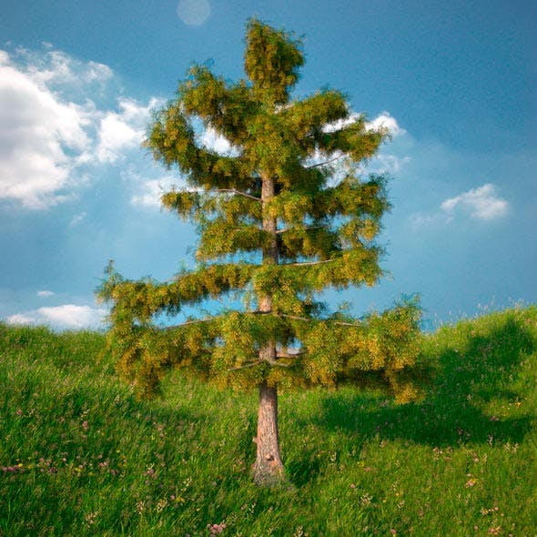 Cedar Tree No 2