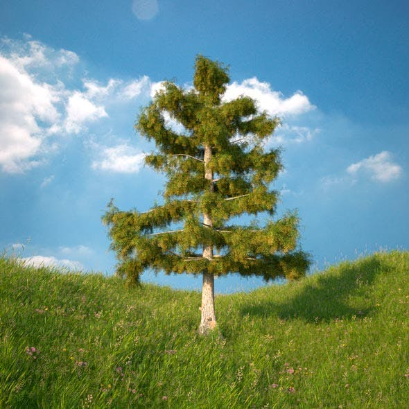 Cedar Tree No 4 - 3DOcean Item for Sale