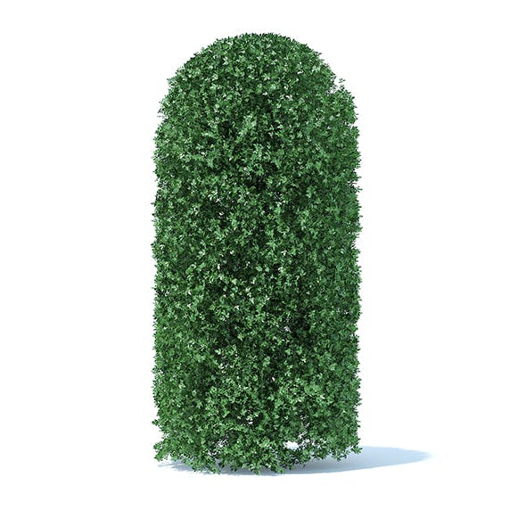 Tall Round Shrub - 3DOcean Item for Sale