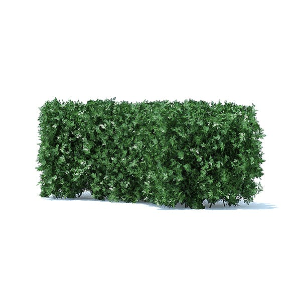 Curved Hedge