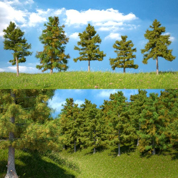 Cedar Tree Collection (5 Models) - 3DOcean Item for Sale
