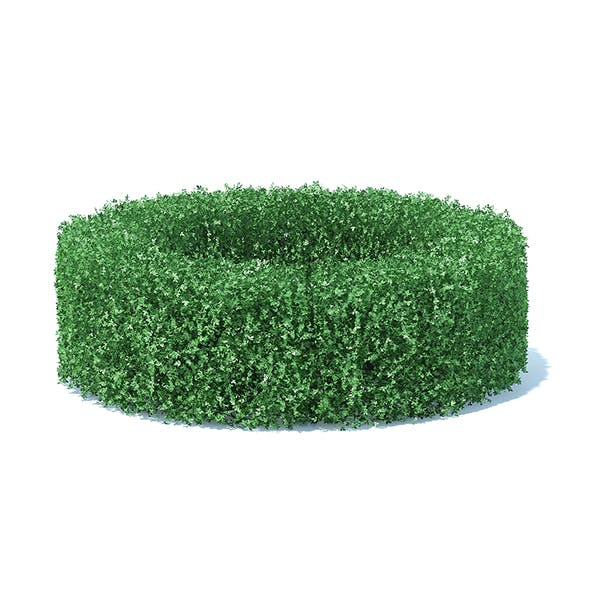 Circle Shaped Hedge