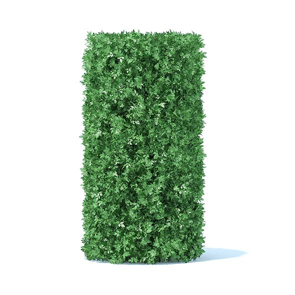 Cylindrical Hedge - 3DOcean Item for Sale