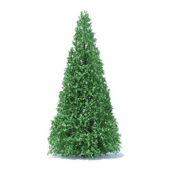Cone Shaped Hedge - 3DOcean Item for Sale