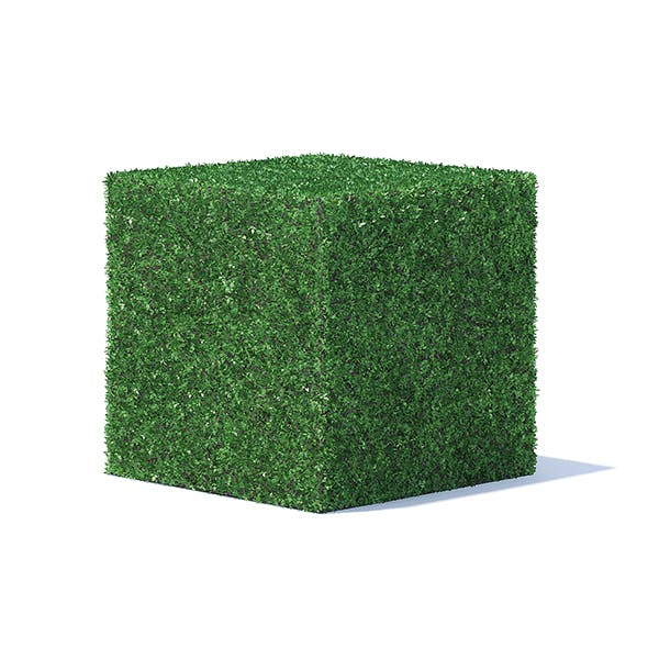 Cube Shaped Hedge - 3DOcean Item for Sale