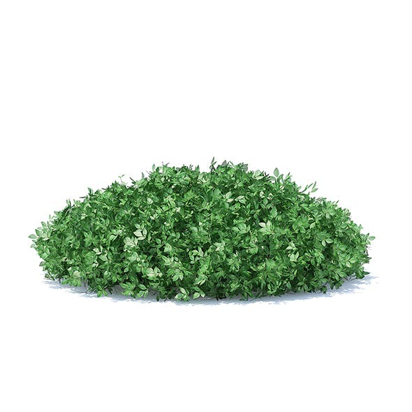 Short Round Hedge - 3DOcean Item for Sale