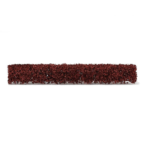 Straight Red Hedge