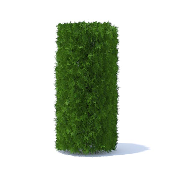 Cylindrical Thuja Hedge - 3DOcean Item for Sale
