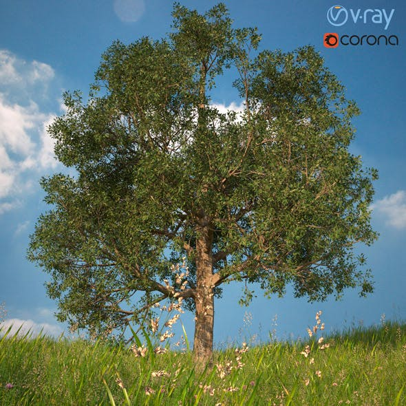 Tree 3d Model No 1 - 3DOcean Item for Sale