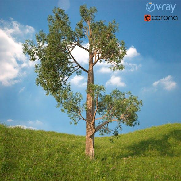 Tree 3d Model No 3
