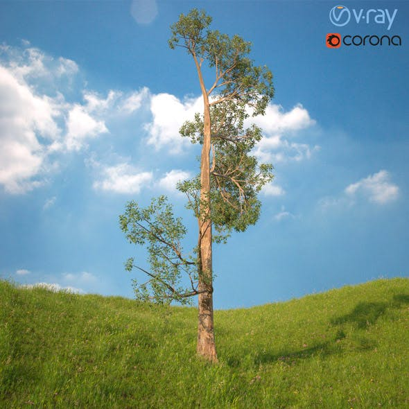 Tree 3d Model No 4 - 3DOcean Item for Sale
