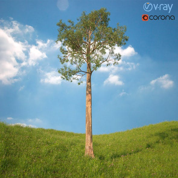 Tree 3d Model No 5 - 3DOcean Item for Sale