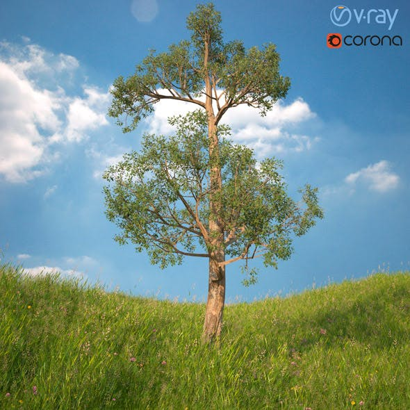 Tree 3d Model No 2 - 3DOcean Item for Sale