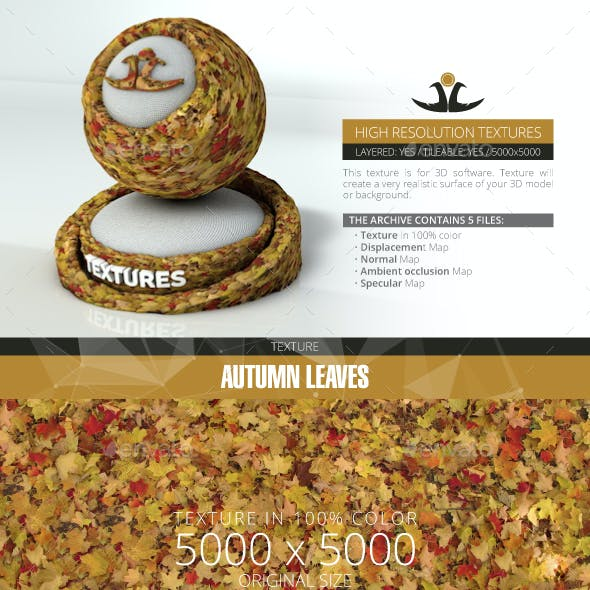 Autumn Leaves 11