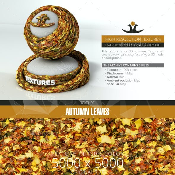 Autumn Leaves 12