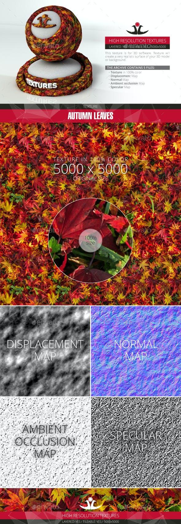 Autumn Leaves 13 - 3DOcean Item for Sale