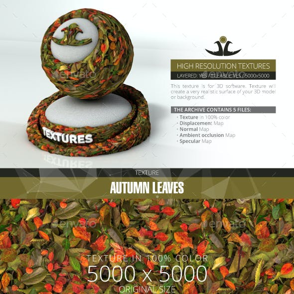Autumn Leaves 14