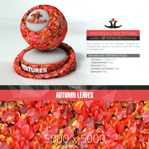 Autumn Leaves 16