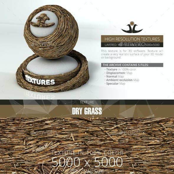 Dry Grass 4